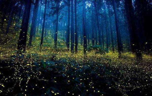 夏夜观看萤火虫可以去这几个地方