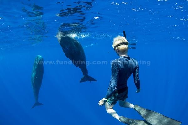 摄影师印度洋潜水捕捉到友好抹香鲸罕见特写