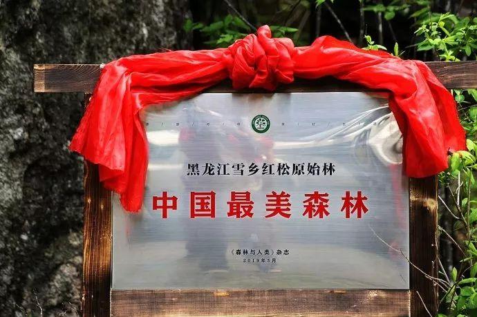"""中国旅游日,走进""""中国最美森林""""雪乡原始林风景区图片"""