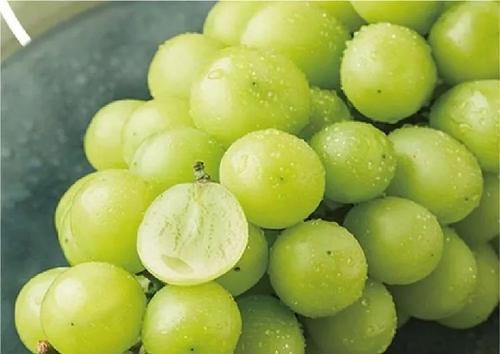 黑提、红提、青提,吃哪种葡萄最养生?不管好坏,1种葡萄要少吃