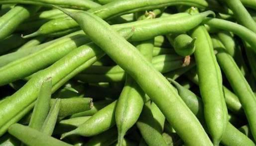 家常好菜——清炒四季豆,唯典教你小妙招!简单易做还脆嫩爽口