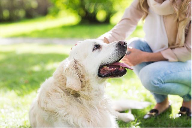 狗狗打喷嚏?可能是表示欢迎,也有可能是有病(图5)