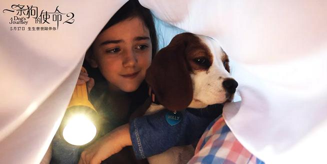 《一条狗的使命2》:无以言表的爱