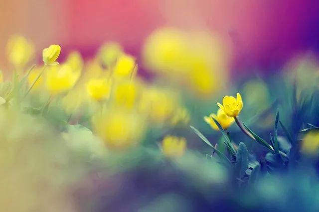 打破常规!6 种创意花卉拍摄技巧!
