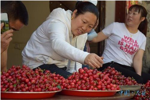 茂县甜樱桃成熟上市 游客采摘正当时