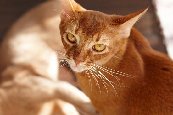 什么猫便宜在300以下图片