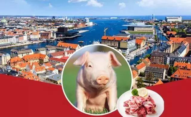 全球最大养猪场宣布马上就要开到中国了, 4000万猪农坐不住了……