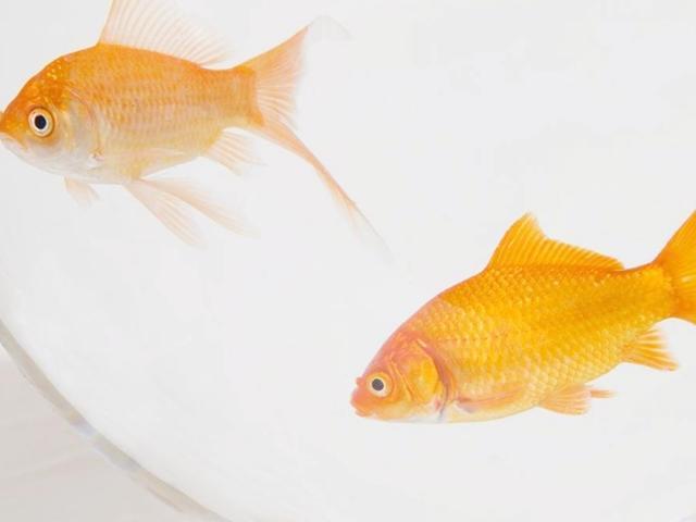 老师留作业画一条鱼,奶奶神操作,网友 姜还是老的辣