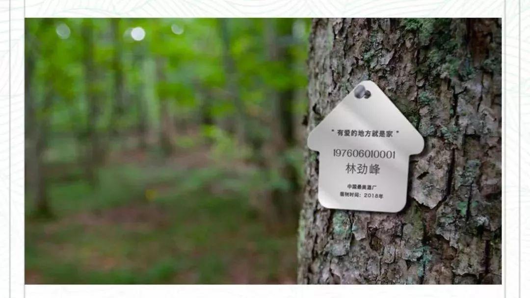 最漂亮树牌设计图片