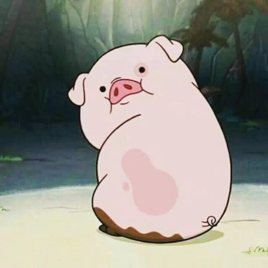 猪拱白菜图片表情包