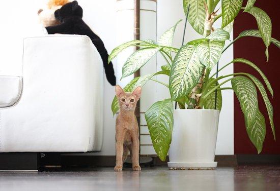 宠物猫价格100元以内图片