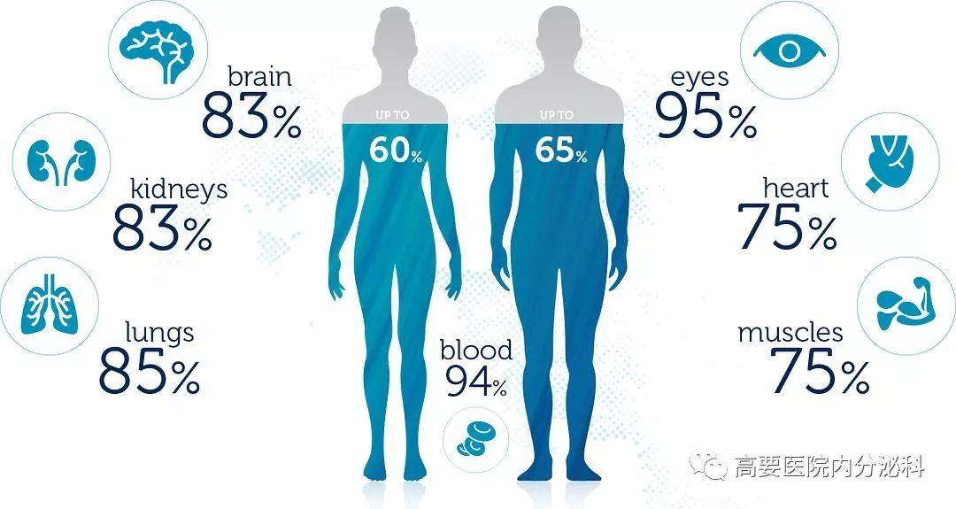 人体 水分 量