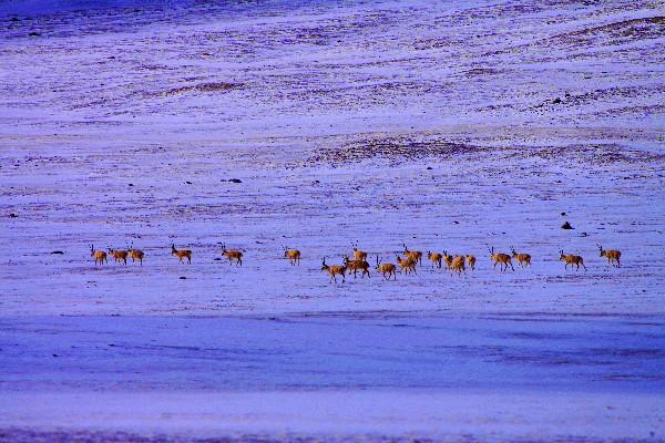 <b>用21天成为世界交配期最长的动物,为何长途跋涉迁徙,至今仍是谜</b>