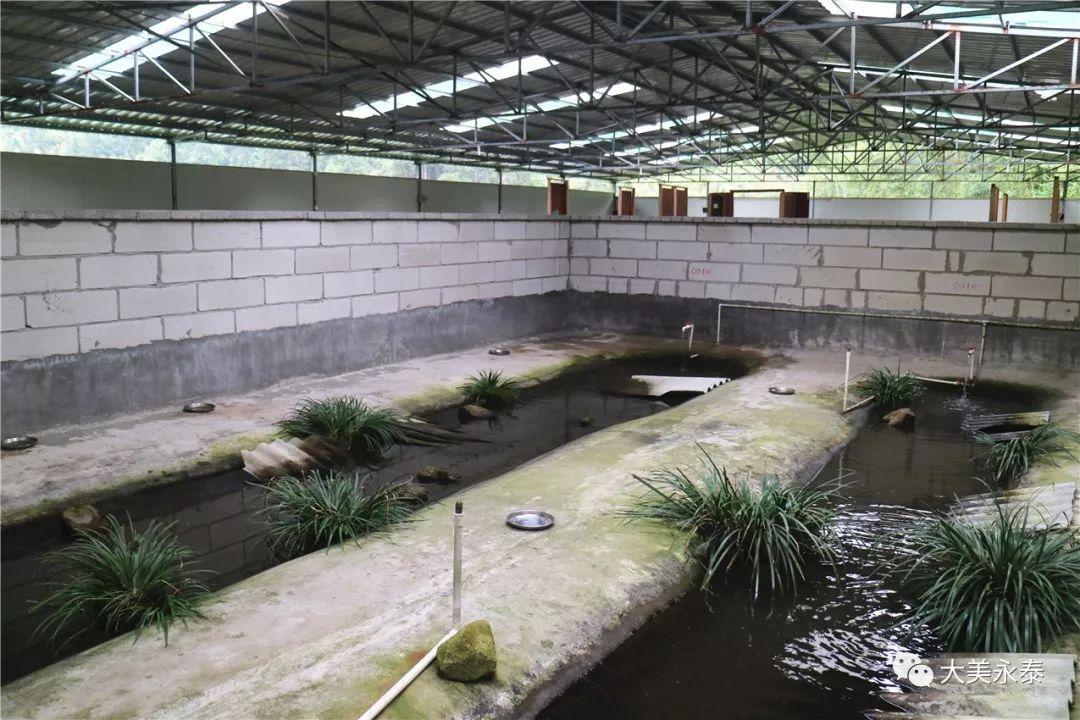 石蛙池设计图