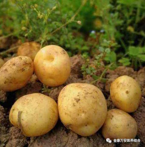 【河南金康万安健康管理中心每日一菜】-土豆的营养价值与功效