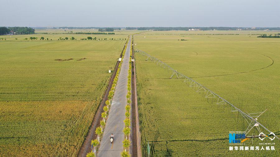 航拍许昌市建安区:小麦主产区丰收在望