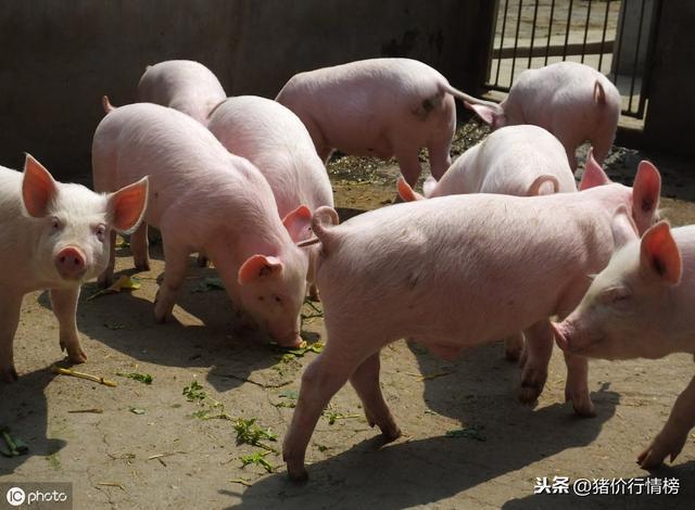 diy猪型手工制作