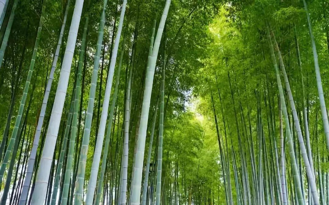【907 | 诗词】五月知竹,人生知足