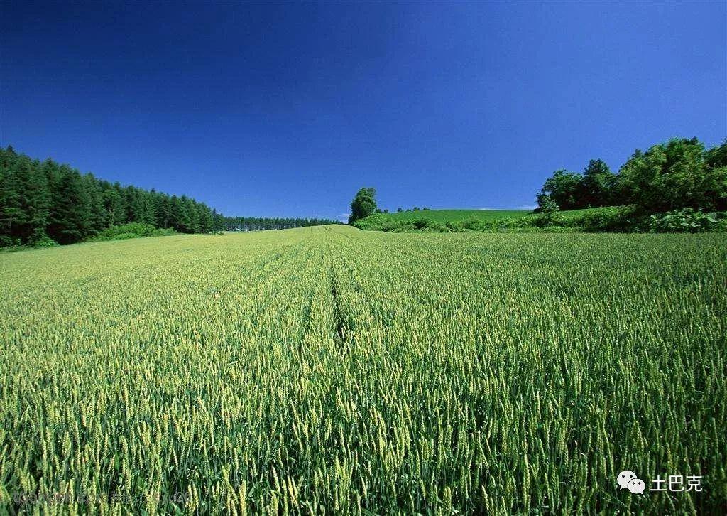 做农资生意代理商应该主动营销