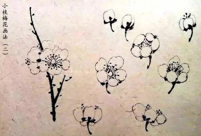 一笔画一瓣,5笔画梅花 画各种方向的花,看了没有学不会的