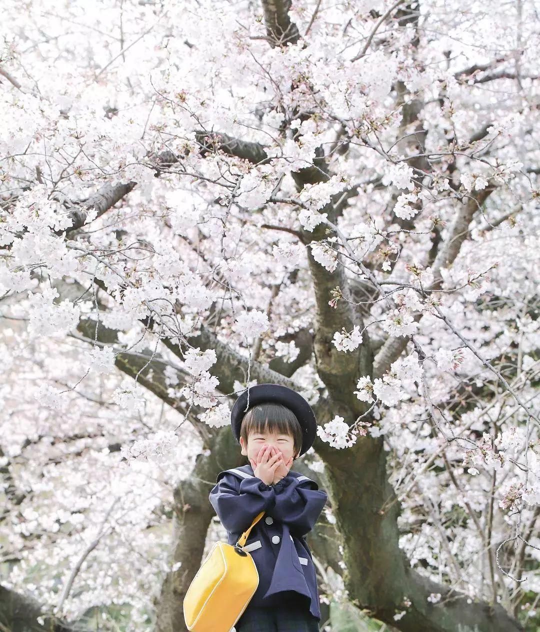 日本妈妈偷拍樱花树下的儿子,美成宫崎骏童话,治愈无数人