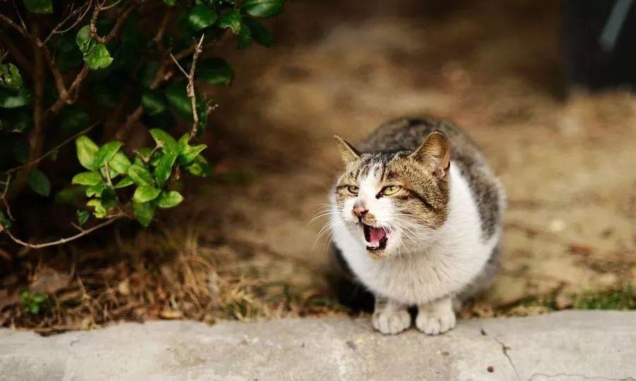 怎样才能接近流浪猫 接近流浪猫要注意什么