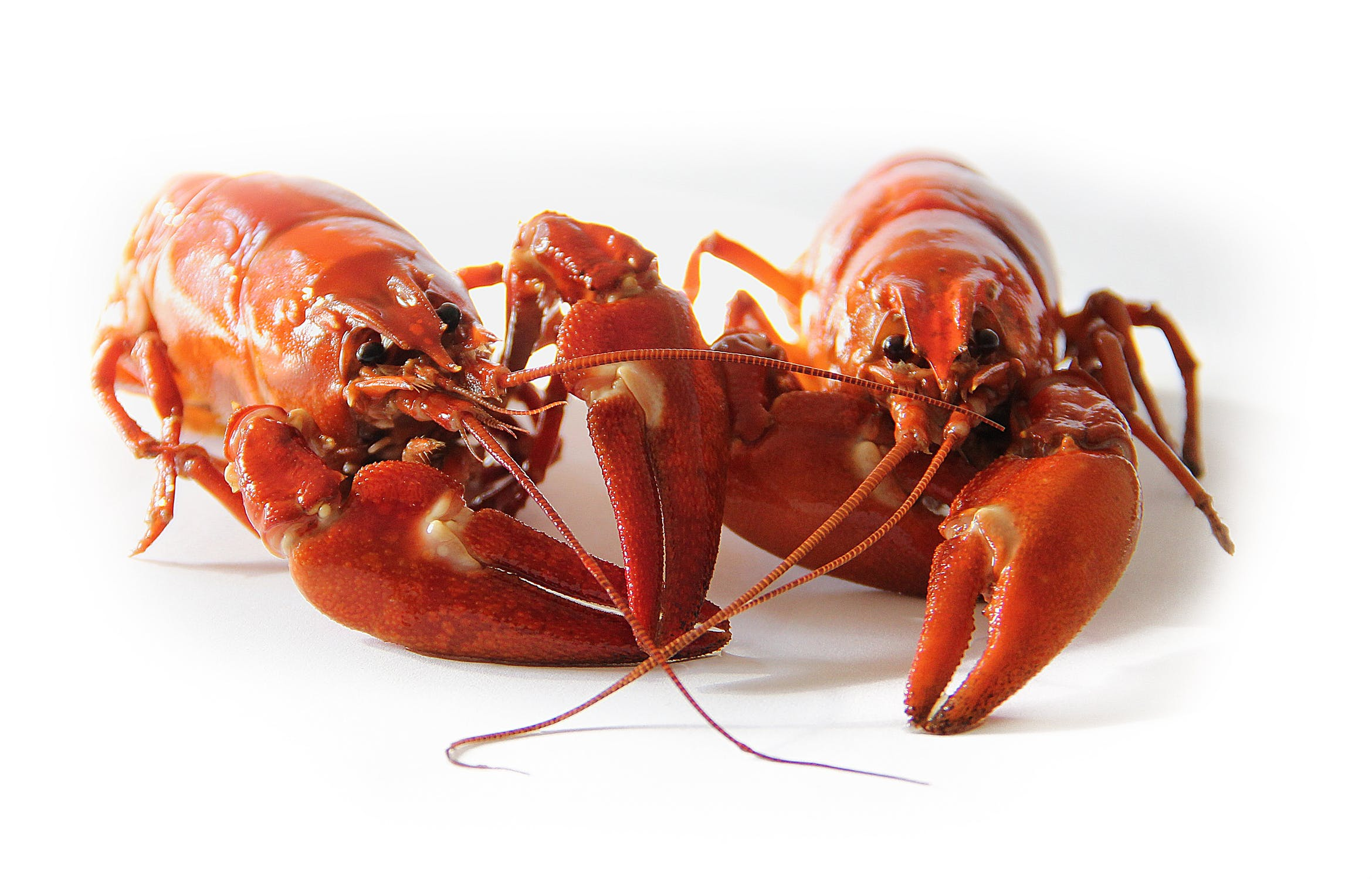 小龙虾上榜入侵物种名录,吃货们这次为啥也解决不了问题了