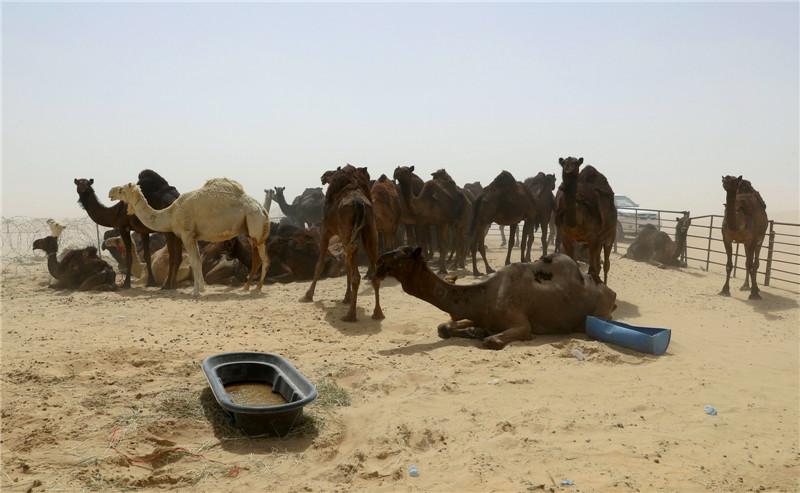 牧民突然被驱赶出国,最可怜的还是动物,背后原因令人无奈