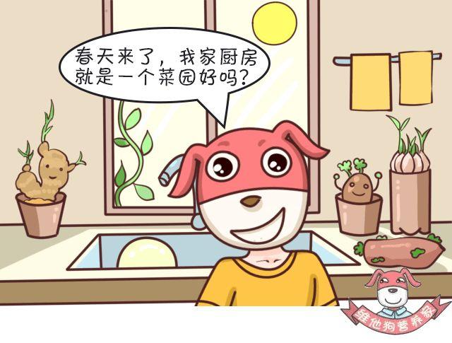 【科普营养】发芽食物有些营养会翻倍,有些真的会中毒!