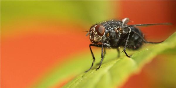苍蝇落在食物上会发生什么?这次我们来说仔细点