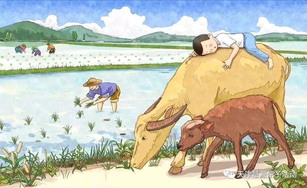 【6.8端午主题营】快乐芒种—当端午遇上插秧,我们一起去田里搞事情图片
