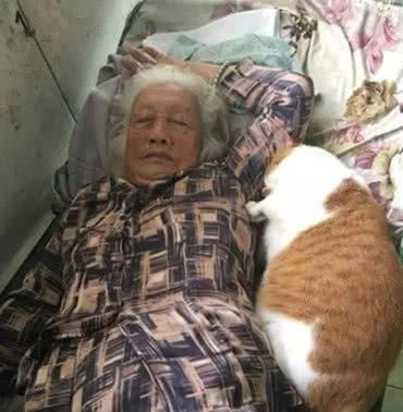 女儿买回两只猫陪母亲,空闲时回去看望,刚进屋就被这幕给吓住
