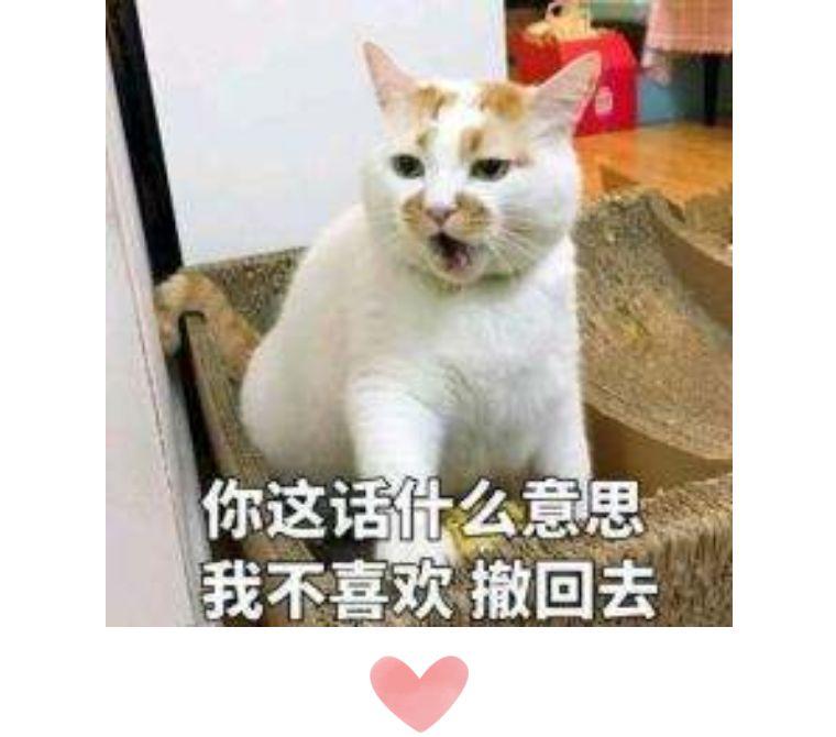 猫咪突然乱尿尿图片