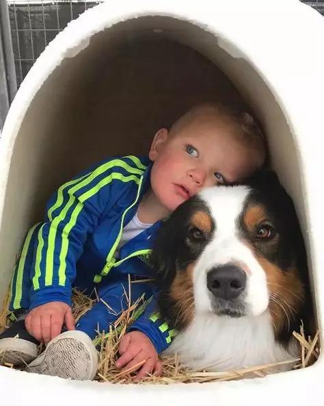原创才3岁就有一屋狗,这是全宇宙最幸福的小孩吧!?