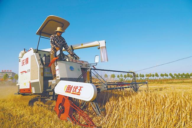 安徽省4296万亩小麦全面开镰