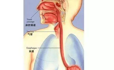 【老师说】咳血、肺小结节=肺癌吗?肺癌,你了解多少?