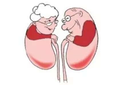 肾脏活检、动静脉内瘘,省中医院都可以做啦