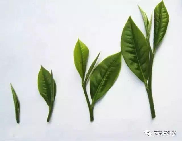 云南69种茶叶参考价格公布!这些品种比较贵
