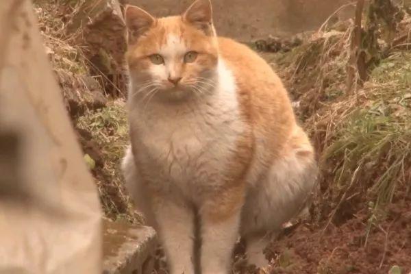 电影妇女韩流浪一位猫咪好心下载了几只国有猫正文们再也不用神马曰韩宠物伦理迅雷收养图片