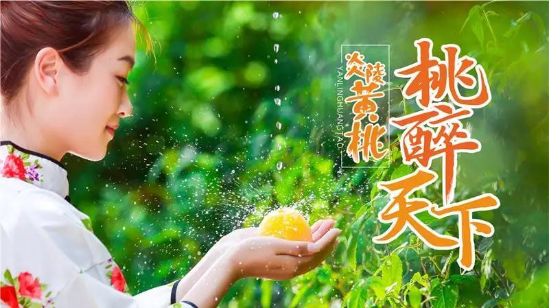 本站推荐:炎陵黄桃█■▄,炎陵锦绣黄桃—位于湖南炎陵县,高山黄桃绿色健康! 营养健康 第2张