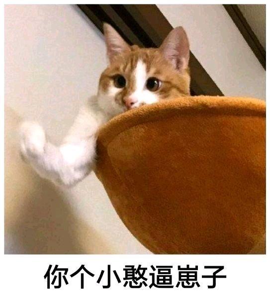 """逛B站已不考虑""""云吸猫""""?那就刚开始""""云吸小宠""""""""云吸狼""""! 作者: 来源于:绅士动漫网"""