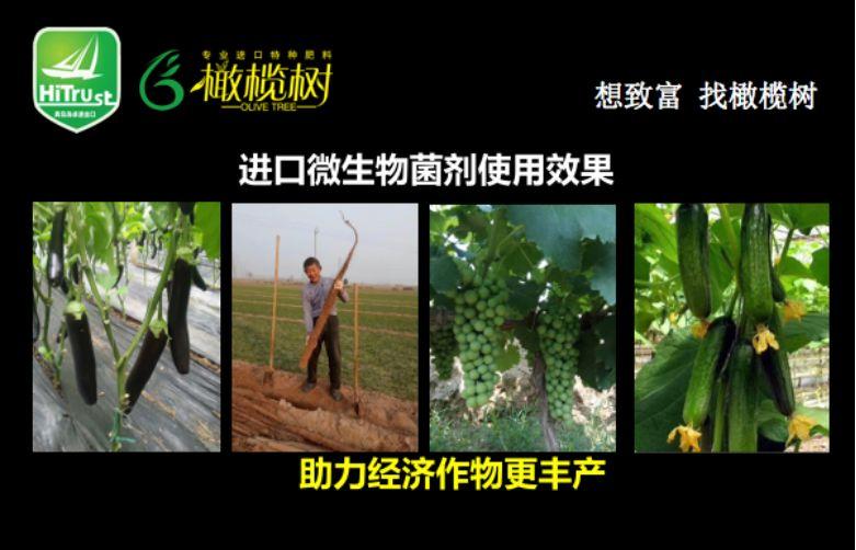 每周一星第四十期|让食用者放心,让耕种者满意——山东海卓