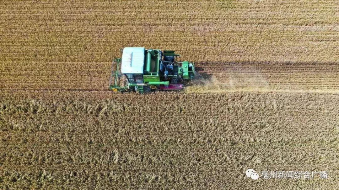 今天的预报有点烫手!在亳州收麦的老乡速看!~