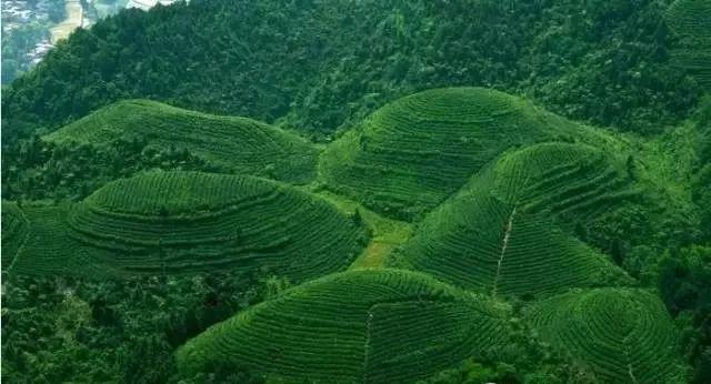 茶文化历史图片