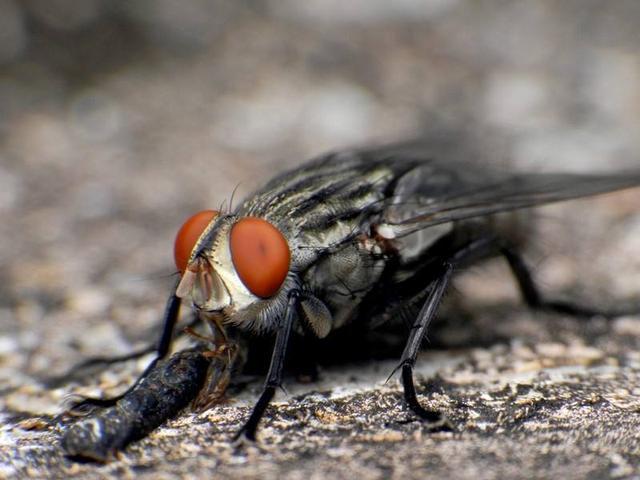 蛆如何变成苍蝇_肯德基又吃出苍蝇卵?这次网友纷纷站出来辟谣_新闻