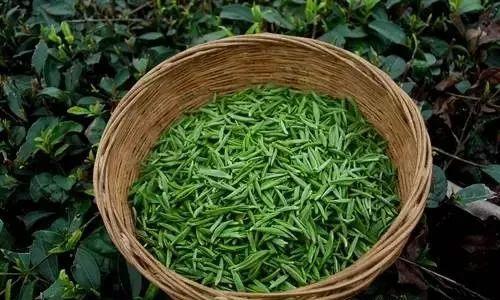 贵州茶文化历史图片