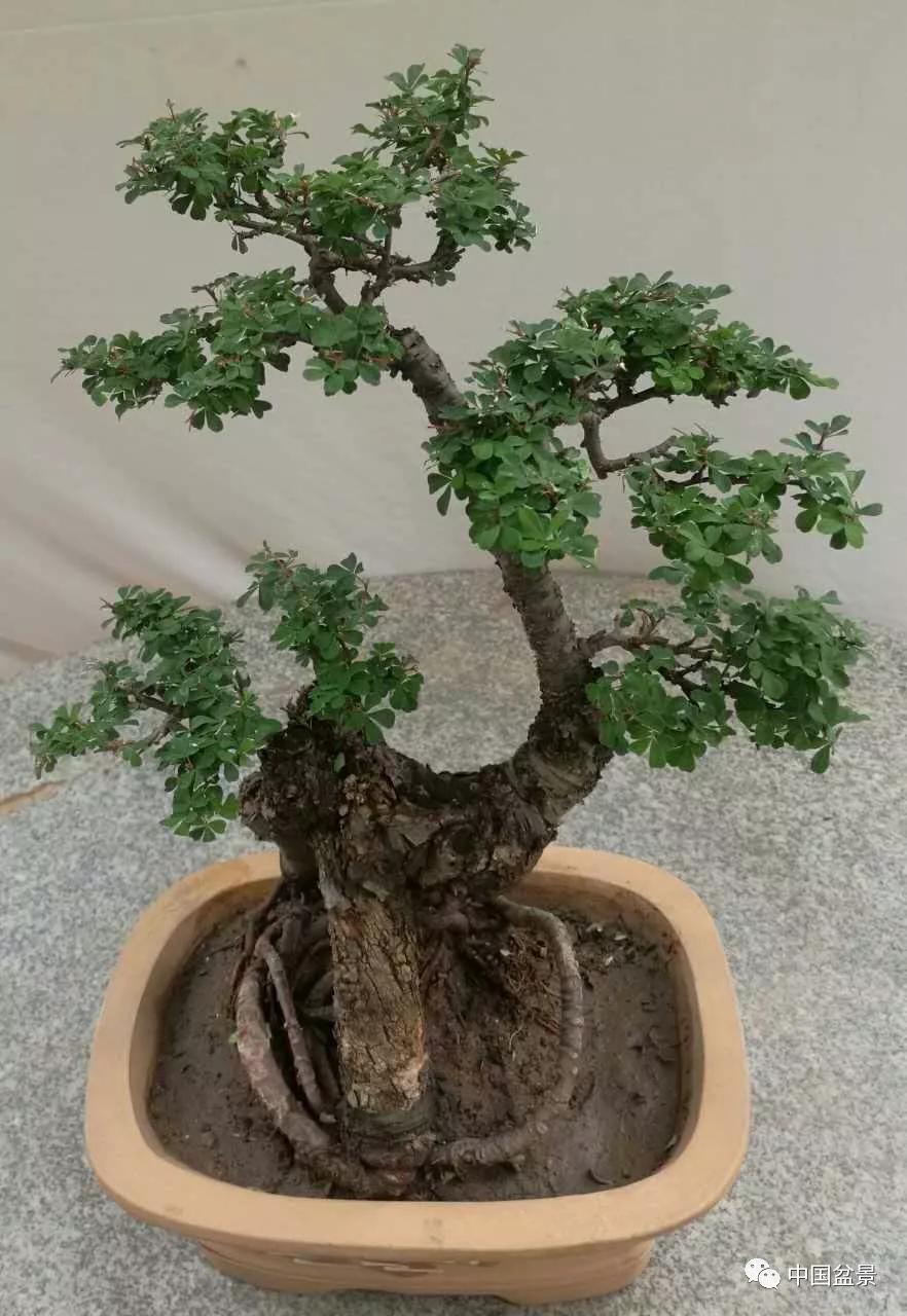 室内植物100种大盆栽