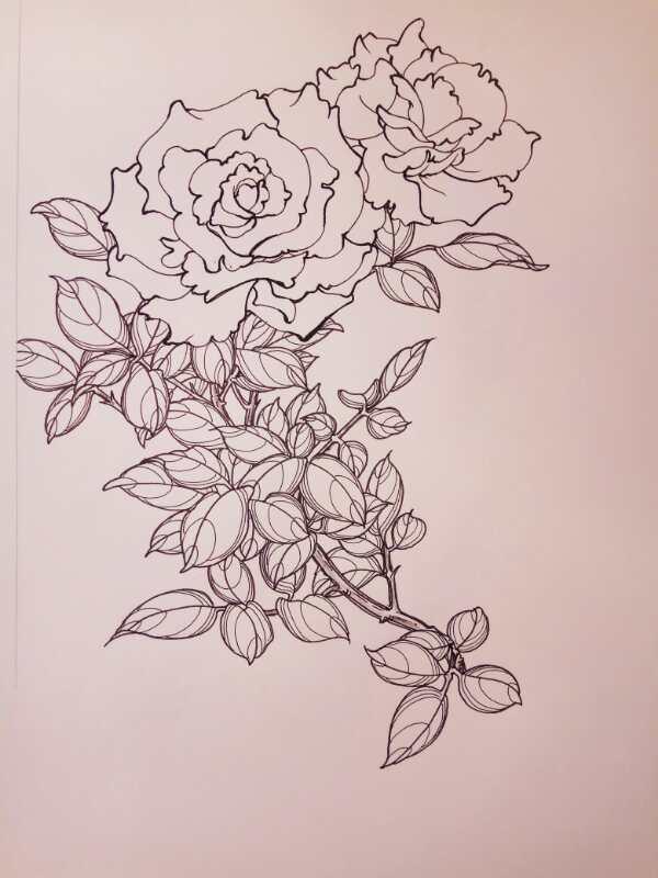硬笔白描花卉习作)01、05针管笔画花瓣.