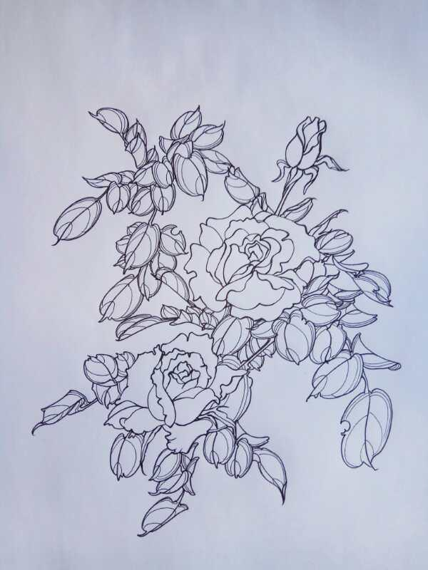 硬笔白描花卉