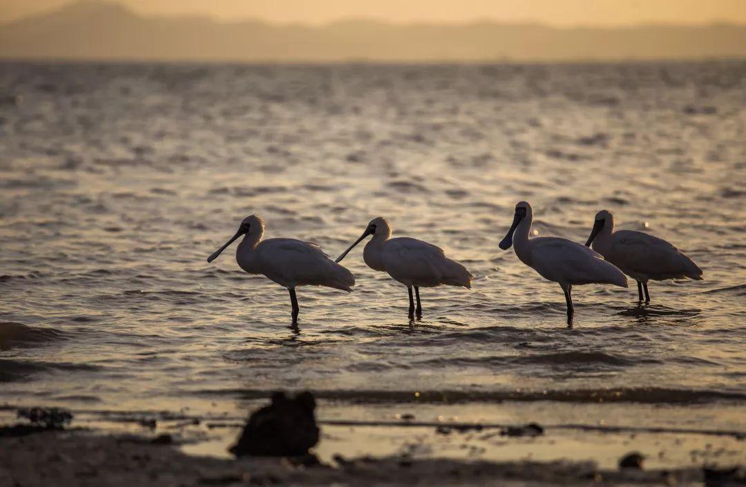 世界环境日 给迁徙一个承诺,让深圳湾成为候鸟的天堂